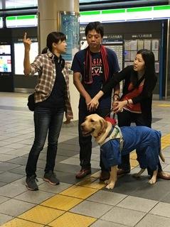 盲導犬のヘ-イス.jpg