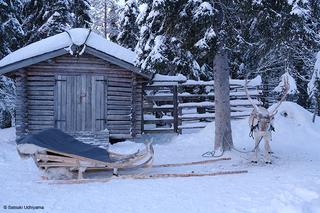 Lapland_reindeer.jpg