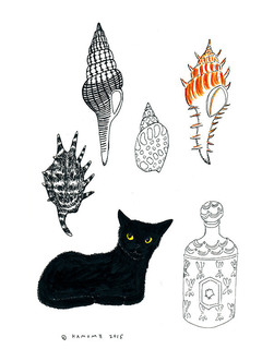 cat_seashell.jpg